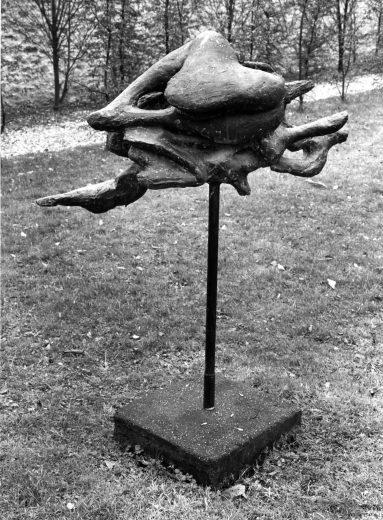 Combat d'oiseaux